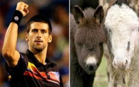 Ep 52: Djokovic Loves Donkey Cheese