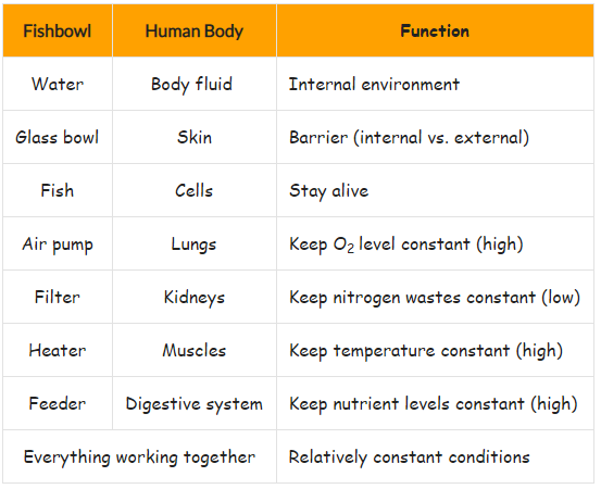 table showing fishbowl model of homeostasis