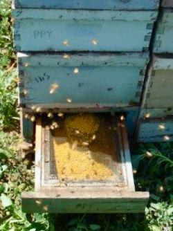Pollen Trap on Hive