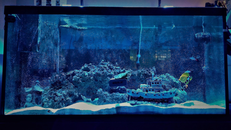 The SSMV aquarium
