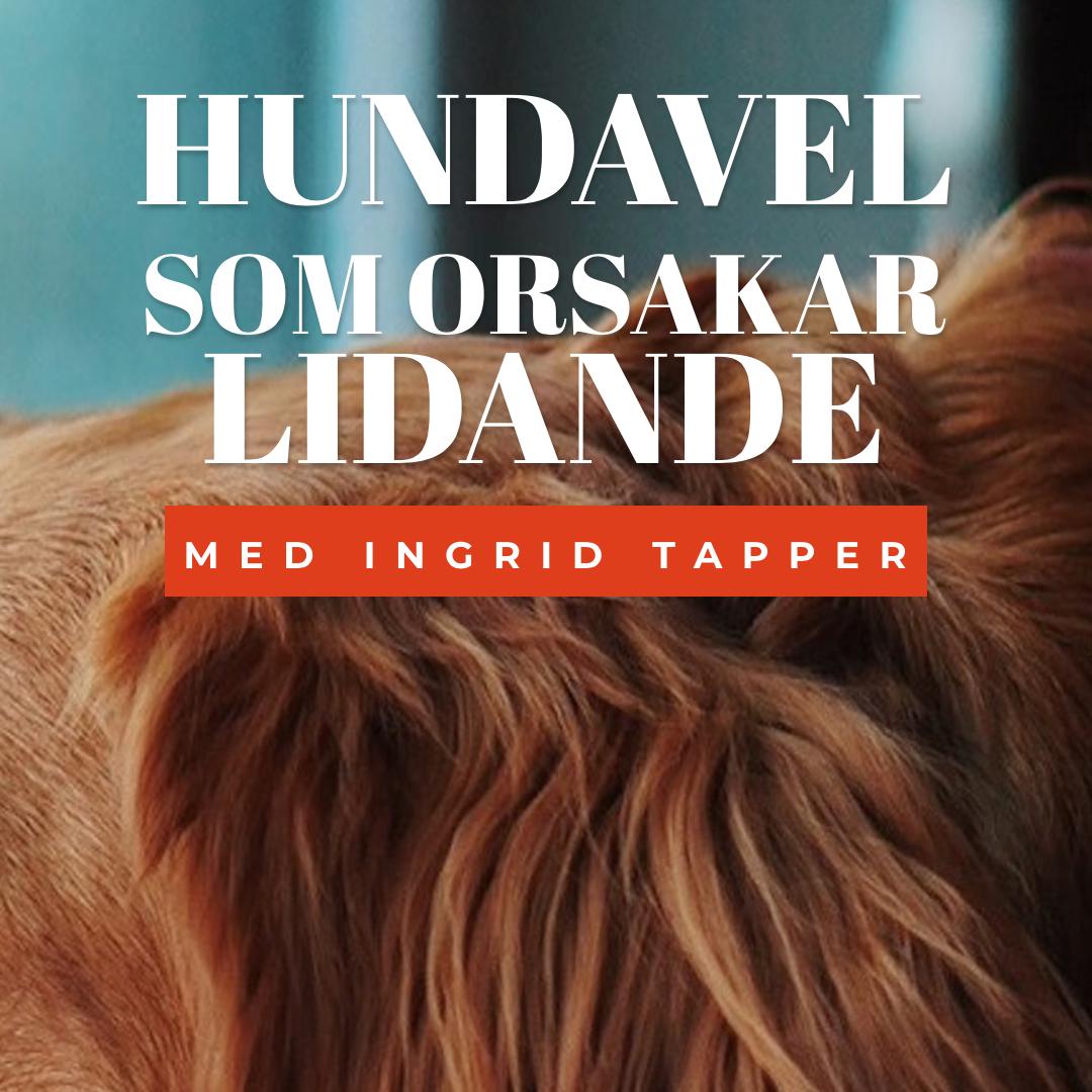 Hundavel som orsakar lidande - Med Ingrid Tapper