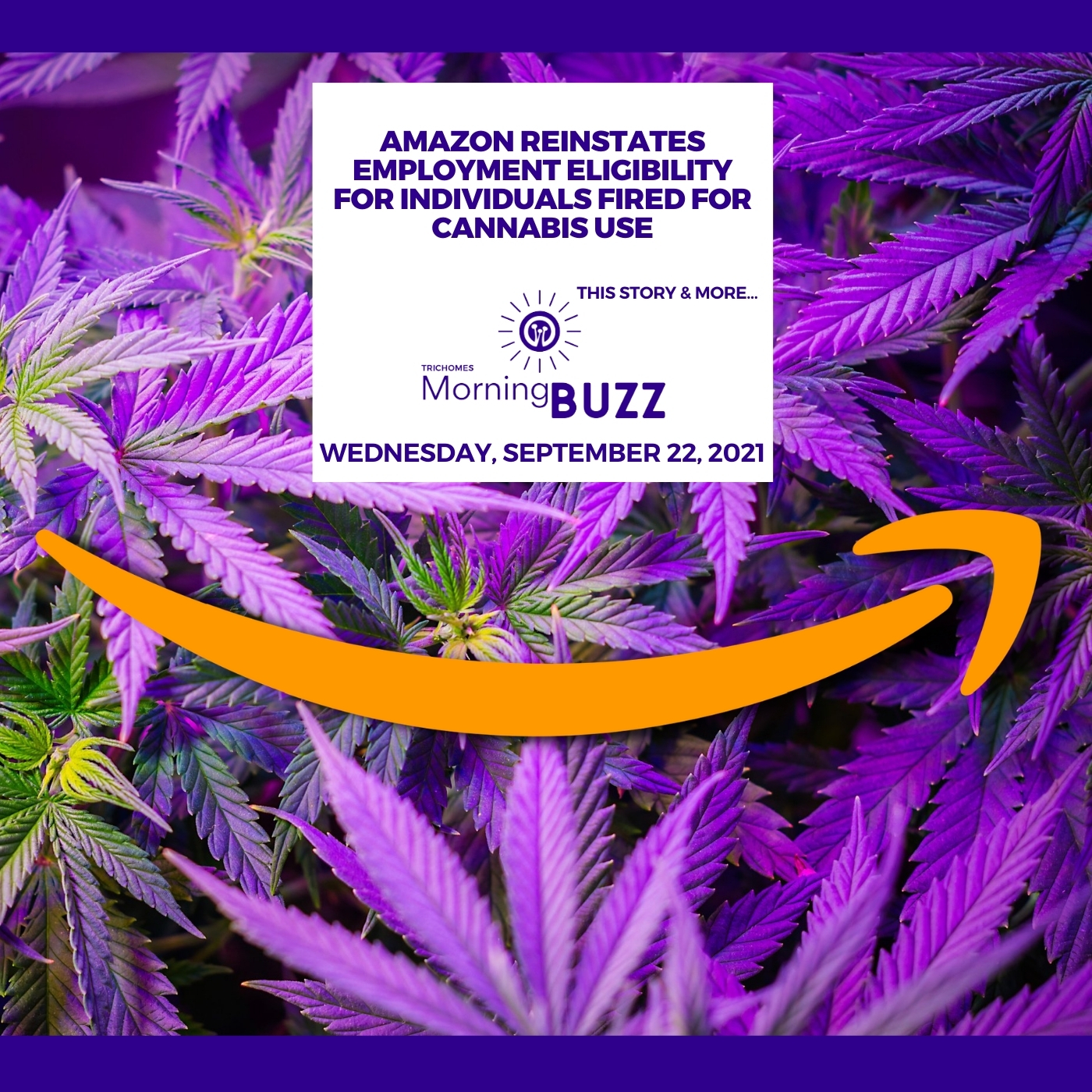 Amazon Reinstates Employment Eligibility For Individuals Fired For Cannabis Use show art